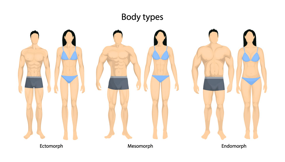The types of Dietary Goals for a Mesomorph